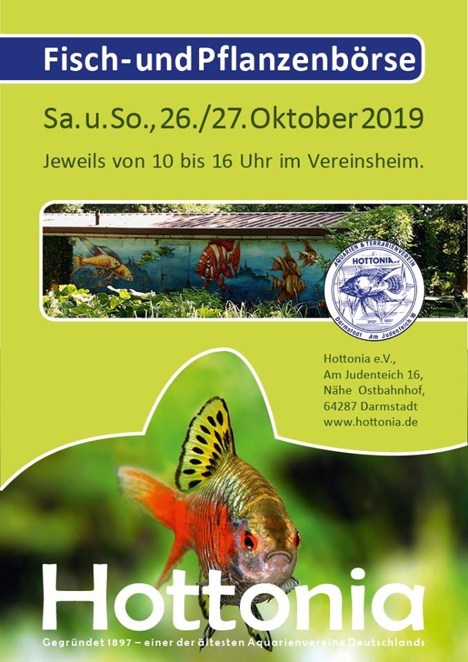 (Event) Zierfisch & Pflanzenbörse bei der HOTTONIA e.V.Darmstadt