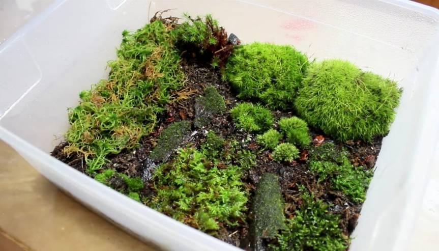 Kleine emerse MossSammlung